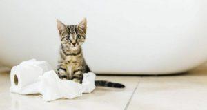 избавиться от кошачьего запаха